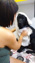 Karem dando banho em Orfeu.