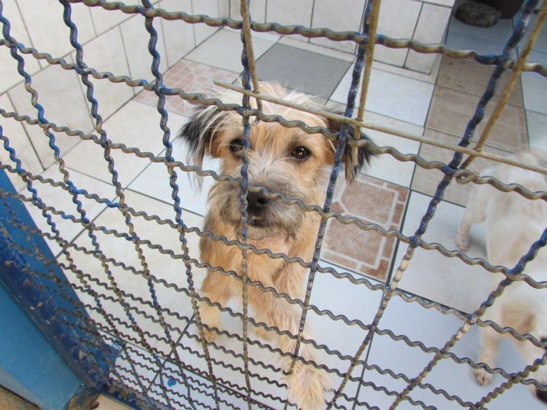 Saúde e Famai trabalham em parceria na Unidade de Acolhimento Provisório de Animais _62670-Fotógrafo(a) - Famai.jpg